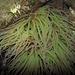 Seeanemone, Actiniaria, Anemone di mare