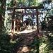 Ein Torii kündet den Shinto-Schrein auf dem Mt. Bentendake an.