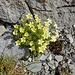sonniger Blumengruss in der Felswelt