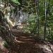 Der Rückweg verläuft auf sehr angenehmem Waldweg.