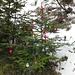 Weihnachtsbaum am Aufstieg zum Hochgernhaus