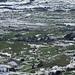 grün-weiss-gemustertes Appenzellerland mit typischer Streusiedlung