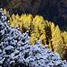 Kalter Winter und goldener Herbst - vereint