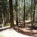 Bald befinden wir uns wieder im schönen Wald...