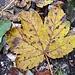 Die meisten Blätter waren noch auf den Bäumen