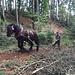 hier werden die Baumstämme noch mit den Pferden hinuntergezogen