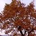 autunno...acceso