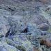 Mit viel Glücke gesehen: eine Gruppe Alpenschneehühner im Herbstkleid
