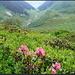 Sewlisegg, nach winterlichen Verhältnissen (notabene Mitte Juni) folgen hier die frühlingshaften...