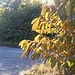 Der Herbst lässt grüßen.
