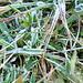 Frostiger Boden im Aufstieg vom Tschugge