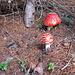 Zum Abschluss noch zwei Pilze, die man lieber nicht essen sollte