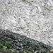 Sehr eindrücklicher Kontrast: das dunkle Totalp Schwarzhorn Serpentinit und das helle Triasdolomit der Weissfluh (02.08.16)