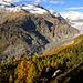 Aletschwald - Aletschgletscher