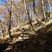 scalinata nel bosco, nei pressi della cascina del Corte di Fondo