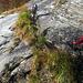 La traccia scavata nella roccia da Zan Zanini in molti punti si è riempita di terra, foglie e poi piante....