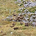 Looking down the east side of Glattchamm, [u Omega3] discovered a herd of ibexes