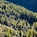 Foliage sotto l'Alpe Angeloga