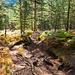 Schöner Waldweg mit viel Farn