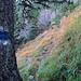 ...und führt weiter über steile Wiesenhänge.