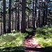Ab durch den Wald ;-)