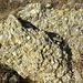 """selten hab ich zuvor so schönes Nagelfluhgestein gesehn (im Allgäu sagt man angeblich auch """"Herrgottsbeton"""" dazu, wobei ich das selbst noch nie von nem Allgäuer gehört hab). <br /><br />So schön diese erodierten und wieder zusammengebackenen Steine sind, irgendwie stimmen sie mich als Bergfan auch traurig. Schliesslich blickt man auf die Leichen der frühen Alpen bzw. des variszischen Urgebirges."""
