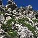Schrofengelände im Abstieg vom Rauhhorn