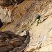 Die mit Seilschlaufen versehene Felsplatte