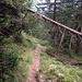 durch den Wald zum Ziel