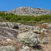 Felsen und niederes Buschwerk wechseln sich ab