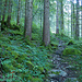 Stimmungsvoller Auftakt im Wald