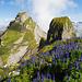 Viele blaue Blumen am Forstberg