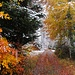 herbstlich-winterliche Farbenvielfalt