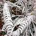 Der erste Schnee hat schöne Formen geschaffen
