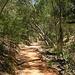 Eucalipti ai lati del sentiero.