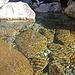 Rio Cornera unterhalb des Wasserfalls.
