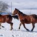 Natürlich auch heute die obligaten Pferde