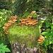 Pilze und Moos besiedeln den Baumstrunk; vgl. dazu [http://www.t-online.de/ratgeber/freizeit/umwelt-natur/id_71081120/hallimasch-in-oregon-der-weltgroesste-pilz.html diesen Beitrag]