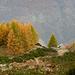Alpe Reso, les mélèzes jettent leurs derniers feux.
