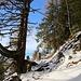 Der Aufstieg zum Gipfelplateau über die bewaldete Südflanke wartet immer wieder mit schönen Eindrücken auf.