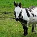 eine komische Kuh ;-), nein ein bunter Esel