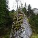 aufrechter Fels mit Baum
