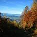Danach geht's über Waldwege hinunter nach Nenzing.