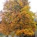 Stupendo albero proprio di fronte all'Ostello di Machaby.
