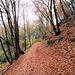 bosco verso Ciona