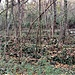 Fra Besazio e Rancate, terrazzamenti abbandonati ed invasi dalla vegetazione.