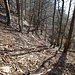 Jede Menge Totholz liegt herum, ein Paradies für Käfer wie den Alpenbock