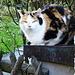 und das obligatorische Katzenfoto