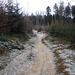 Steineggwald