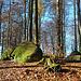 Am ersten kleinen Waldstück